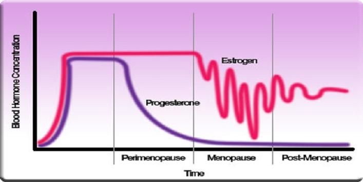 estrogen graph
